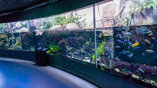 L'aquarium du Danemark, Den Blå Planet, Copenhague, Danemark