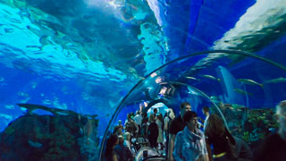 Tunnel dans l'aquarium national du Danemark, Den Blå Planet, Copenhague, Danemark